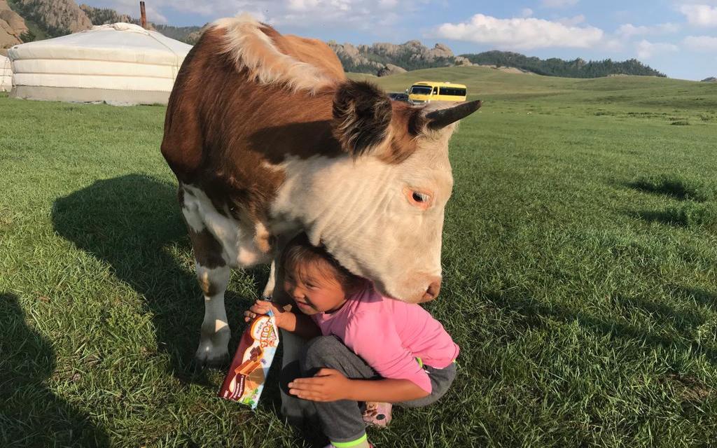 Die Nähe der Tiere in der Mongolei
