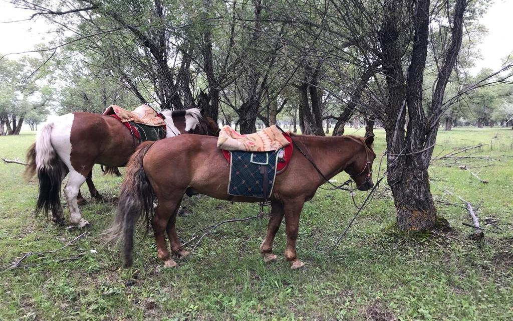 Pause für Pferde während einer Reittour in der Mongolei